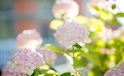 Mietwerk_garden_7